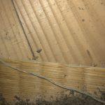 空き家だった物件にシロアリが居ついた…!神奈川県内なら駆除と防蟻工事を承ります!